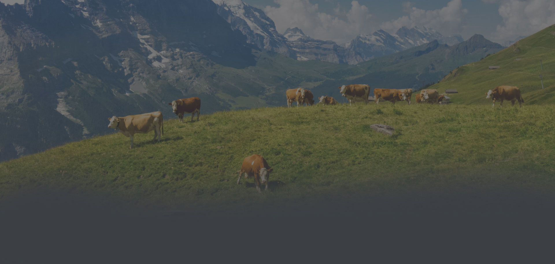 Switzerland Agricultural Internship Travel And Work